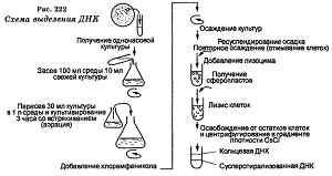 Выделение ДНК
