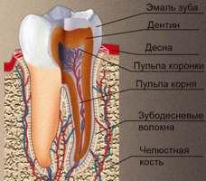 Белки эмали зуба . Биологическая роль