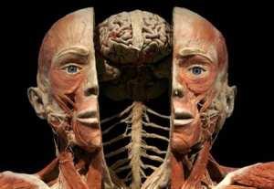 Методы исследования топографической анатомии