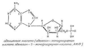 Нуклеиновые кислоты. Строение, свойства, биологическая роль