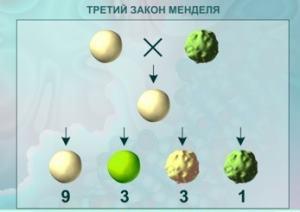 Закон независимого комбинирования генов
