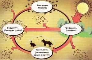 Прямое и косвенное действие экологических факторов