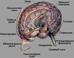 Психофизиология эмоций